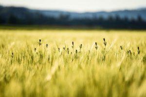 קרקע חקלאית למכירה בקרית אתא